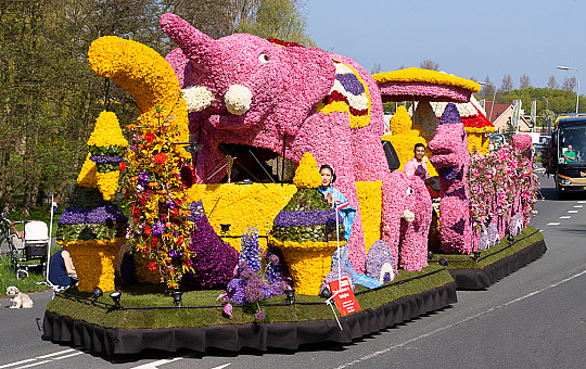 Flower parade flower bulb region